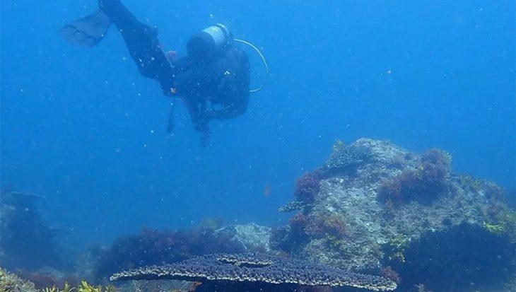 Verzuurde oceanen hebben enorme impact op hun bewoners