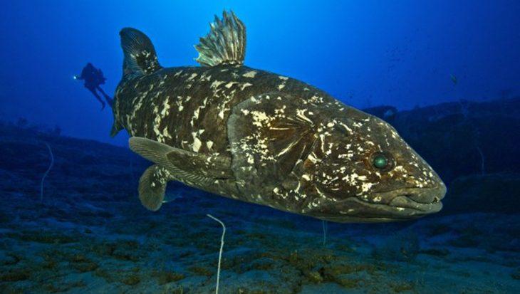 Eén van de zeldzaamste vissoorten – coelacanth – bedreigd door olieboringen