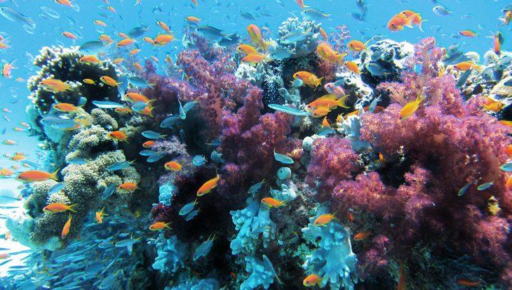 Algen en koralen werkten al samen toen de dino's nog rondliepen