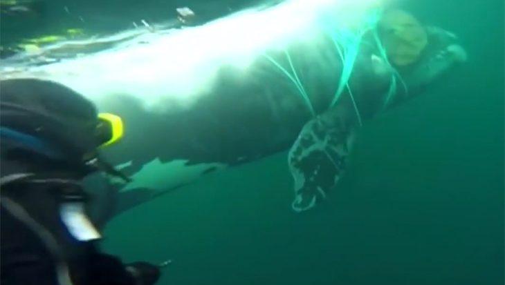 Walvis uit een benarde situatie gered