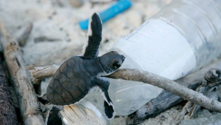 Onderzoek naar herkomst plasticvervuiling op Bonaire