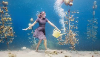 De succesvolle koraal kweektuin van Bonaire