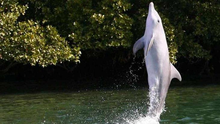 Dolfijn leert wilde soortgenoten lopen