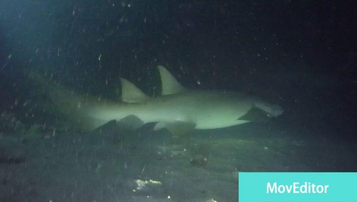 Nachtduik nurse sharks Malediven