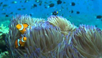 Ontdek Papoea-Nieuw-Guinea