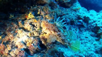 Prachtige duik Elba