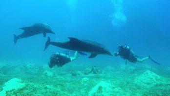 Duiken met dolfijnen in de Golf van Aqaba