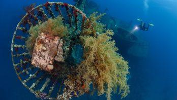 Koninklijk duiken in Aqaba