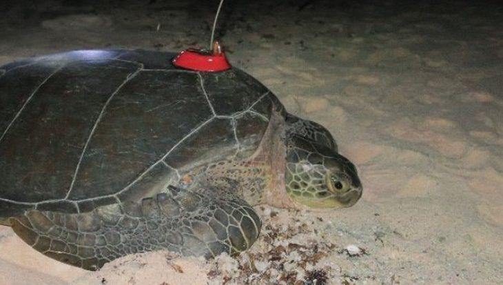 Waar is Bonni de zeeschildpad?