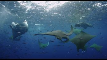 Filmtrailer BBC Oceans: our blue planet