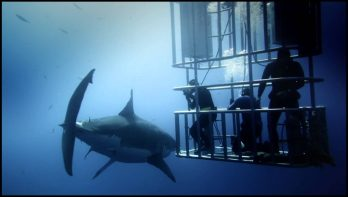 Filmtrailer Great White Shark
