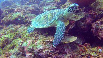 Het duikersparadijs Palawan
