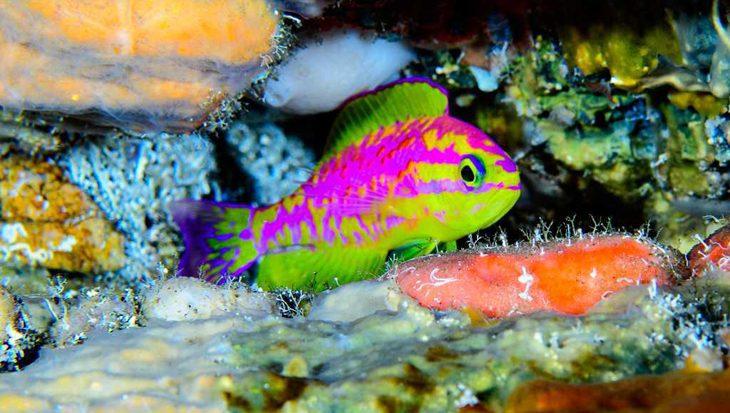 Prachtig neonkleurig visje ontdekt