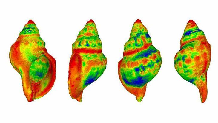 Zeeslakken lossen letterlijk op als aarde verder opwarmt