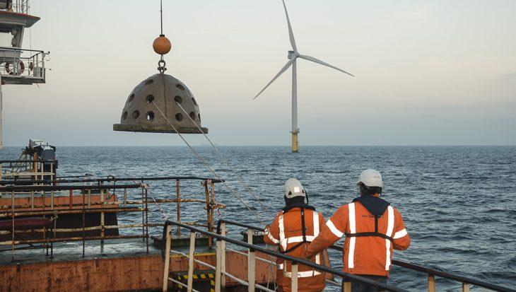 Oesters en kunstriffen te water voor nieuwe natuur in windpark op de Noordzee