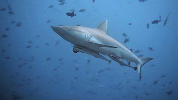 Mijn duikavontuur op de Malediven