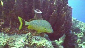Exotisch duiken bij Guadeloupe