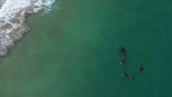 Orka's zwemmen eindje mee met Nieuw-Zeelandse vrouw