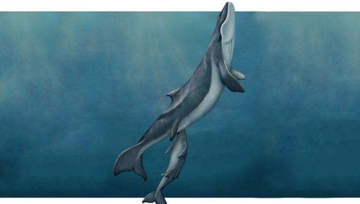 Walvissen zonder baleinen en tanden ontdekt