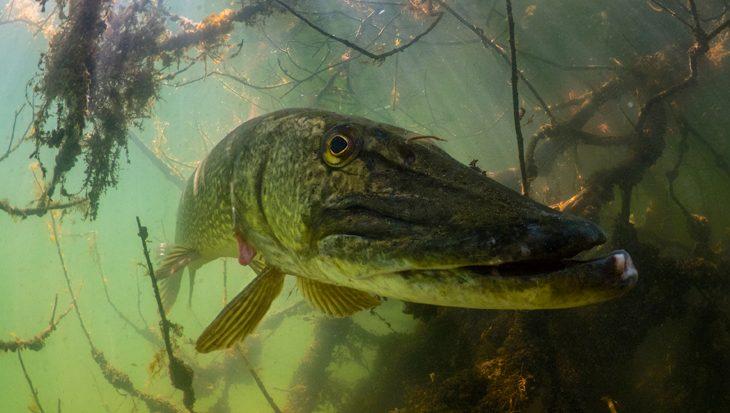 Op de DUIKEN-stand: workshop onderwaterfotografie Bootsy