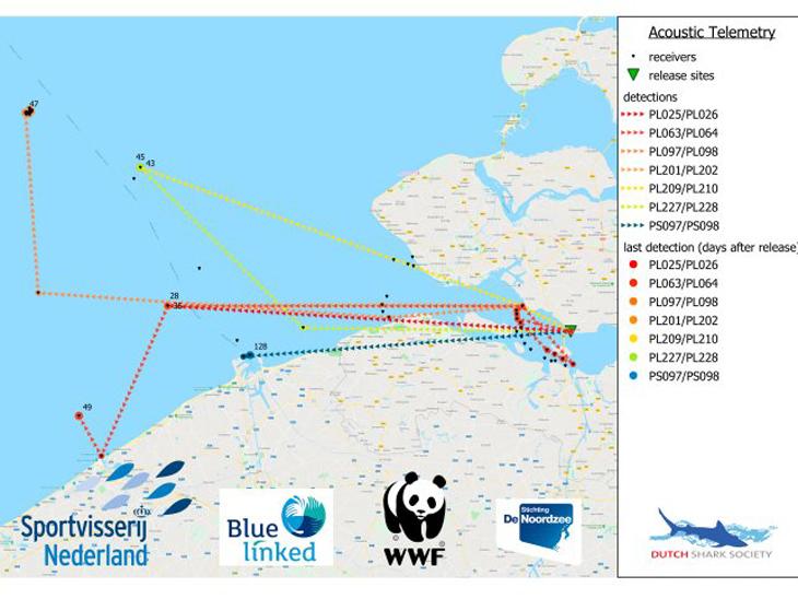 Projectgroep Haaien en Roggen in de Noordzee