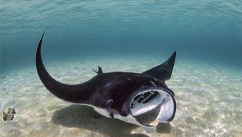 De ondiepe schatten van Bonaire marine park