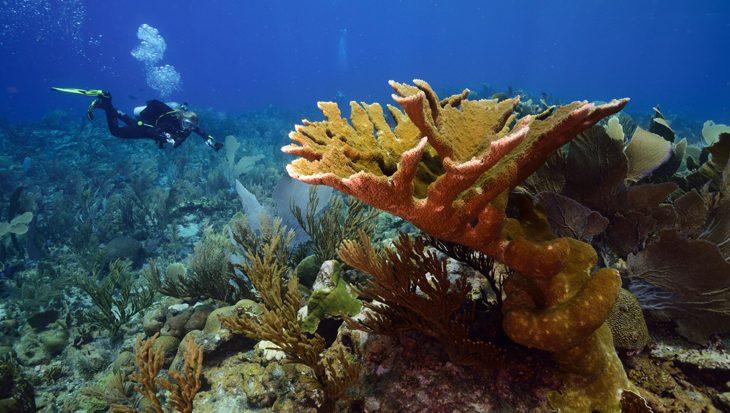 Koraalriffen hebben last van sommige zonnebrandcrèmes
