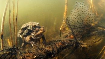 Voorjaarskriebels onder water, paddentrek en meer