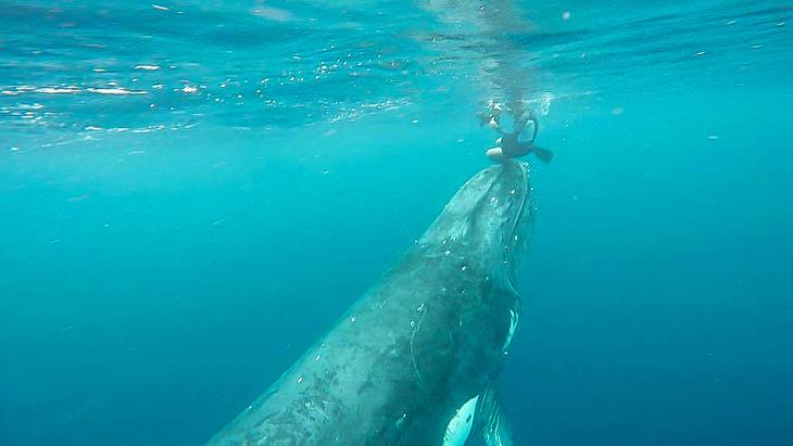 walvis tonga