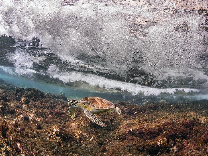 Bonaire Schildpad
