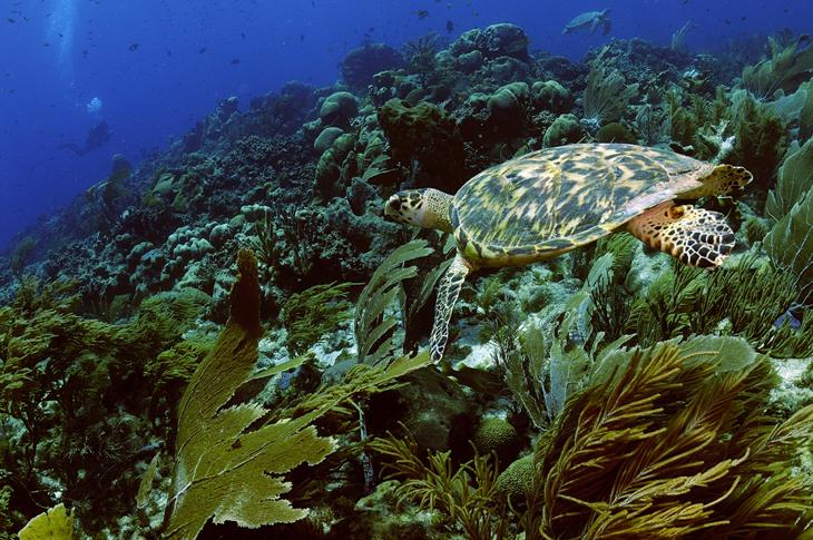 Oostkust Bonaire
