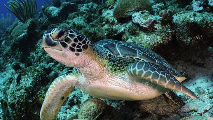 Oostkust: De wilde kant van Bonaire