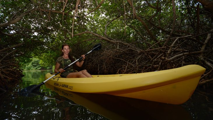 Mangroves, de wouden van de oceaan