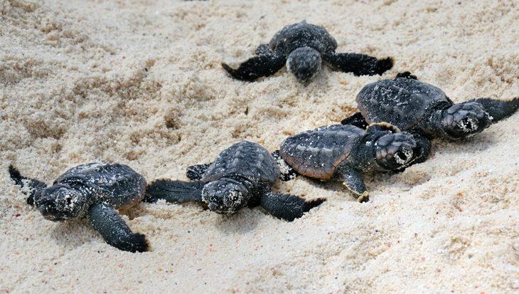 Schildpadden bescherming op Bonaire
