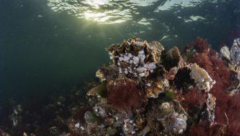 Zeeland duiken: Kijkuitpolder ook voor familie