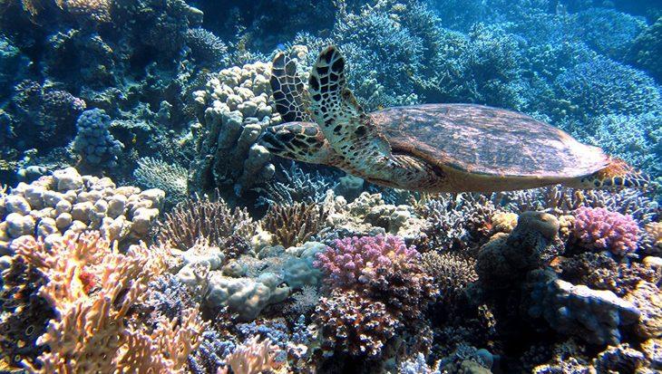 Een wereld zonder koraalriffen?