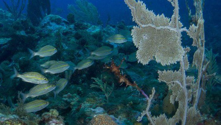 Natuur in Caribisch Nederland zwaar onder druk