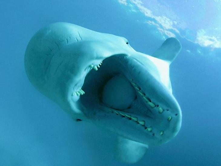 geluid onder water