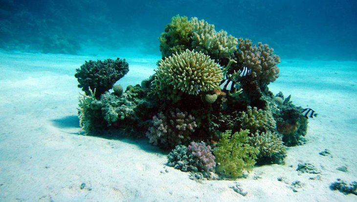 Verbleking: Koraalriffen op de evenaar minder gevoelig