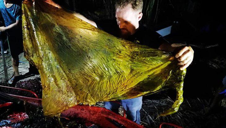 Spitssnuitdolfijn met 40 kg plastic in zijn maag