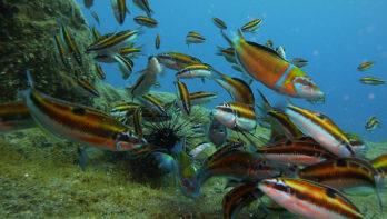 Splash Gomera Diving op het authentieke La Gomera