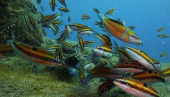 Splash Gomera Diving & Watersports
