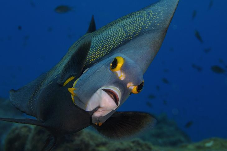 Bonaire duiken onderwaterwereld