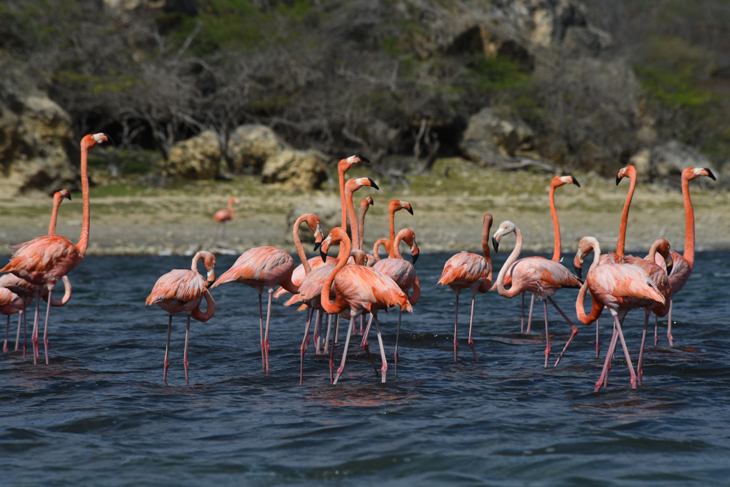 Bonaire Washington Slagbaai flamingo's