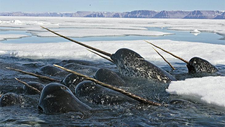 Wat heeft geluidsvervuiling voor effect op zeezoogdieren?