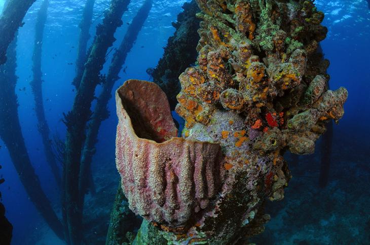Bonaire duiken koraal