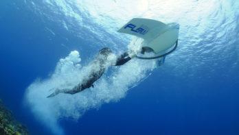 Geruisloos vliegen onder water op Bonaire