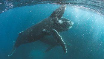 David Attenborough leent stem aan Netflix' Our Planet