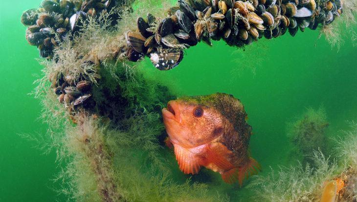 Hier aan de Zeeuwse kust… duiken in Zeeland