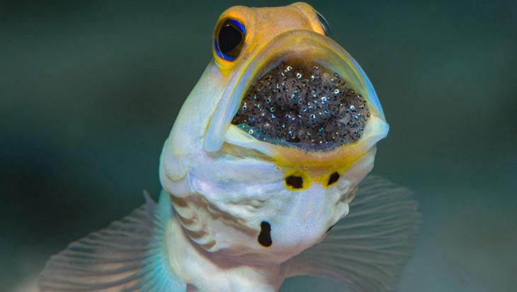 Heilige Graal voor onderwaterfotografen